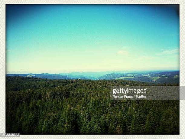 scenic view of forest - roman pretot stockfoto's en -beelden