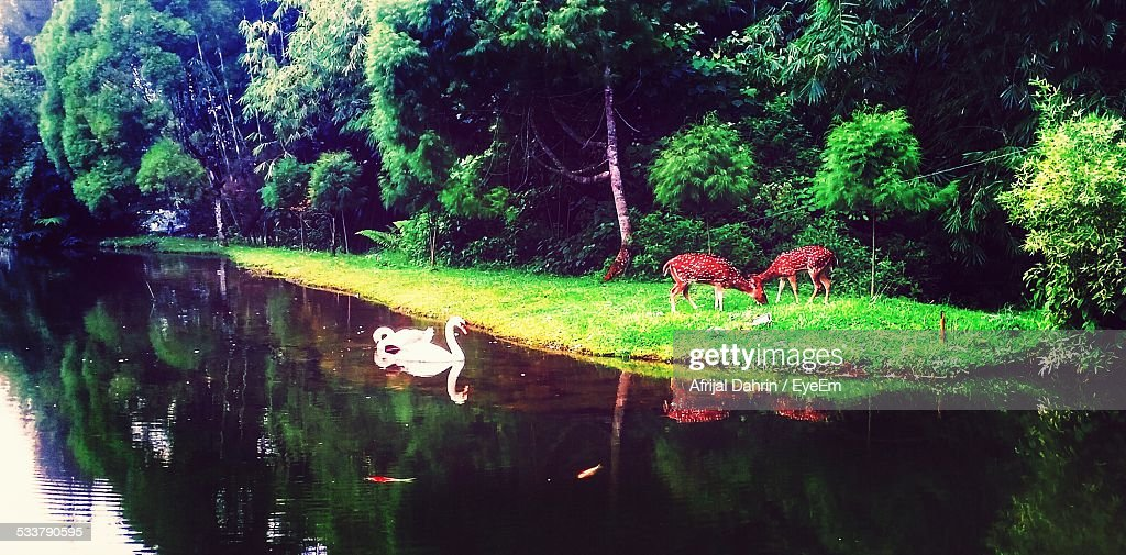 Scenic View Of Forest : Foto stock