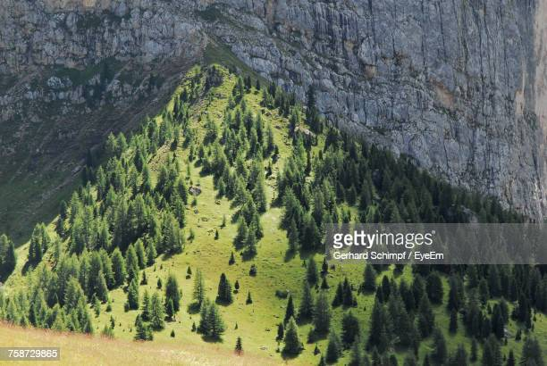 scenic view of forest - gerhard schimpf stock pictures, royalty-free photos & images
