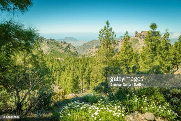 scenic view of forest - tejeda canary islands stock pictures, royalty-free photos & images