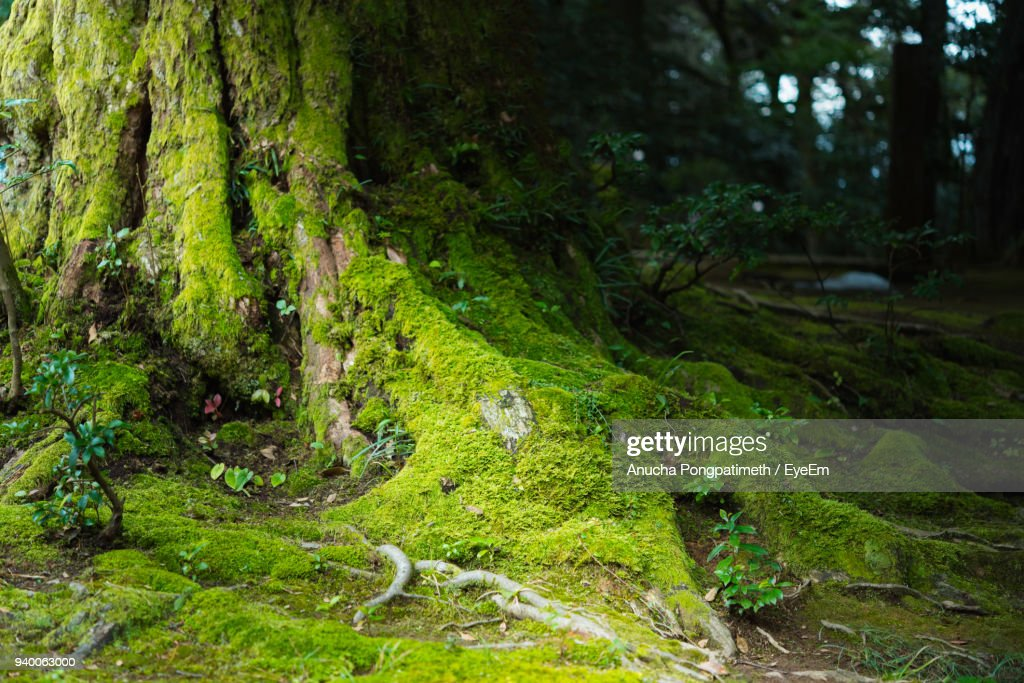 Scenic View Of Forest : Stock Photo
