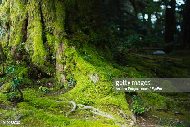 scenic view of forest - fukui prefecture stock photos and pictures