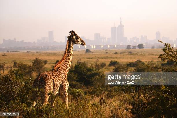 scenic view of giraffe in city against sky - nairobi stock pictures, royalty-free photos & images