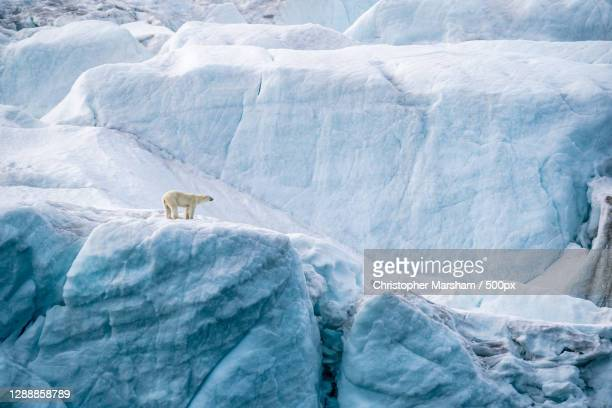 scenic view of glacier,franz joseph land,russia - pack ice stock pictures, royalty-free photos & images
