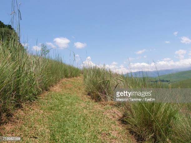 Scenic View Of Grass And Trees Against Sky