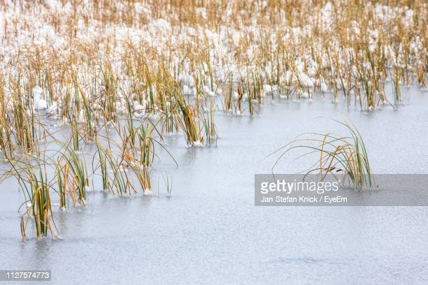 scenic view of grass in frozen lake - número de personas fotografías e imágenes de stock