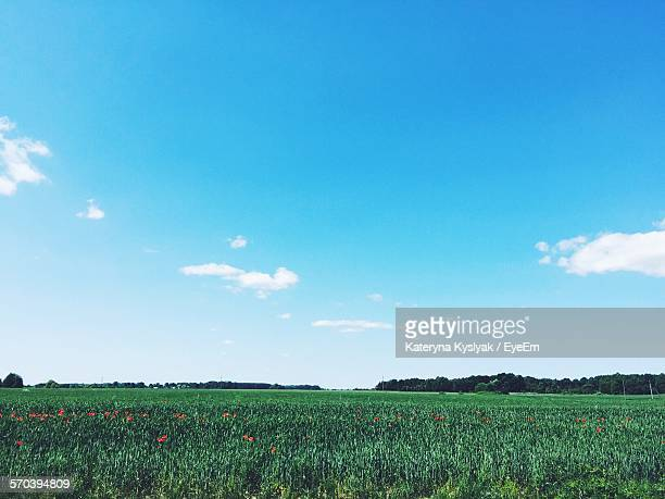 Scenic View Of Grassy Field Against Blue Sky