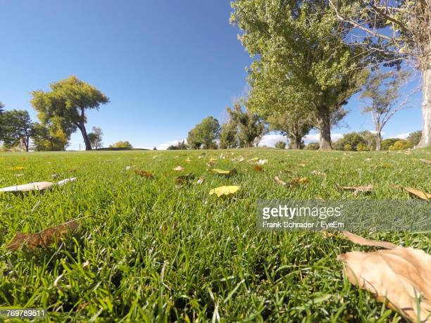 scenic view of grassy field against clear sky - frank schrader stock pictures, royalty-free photos & images