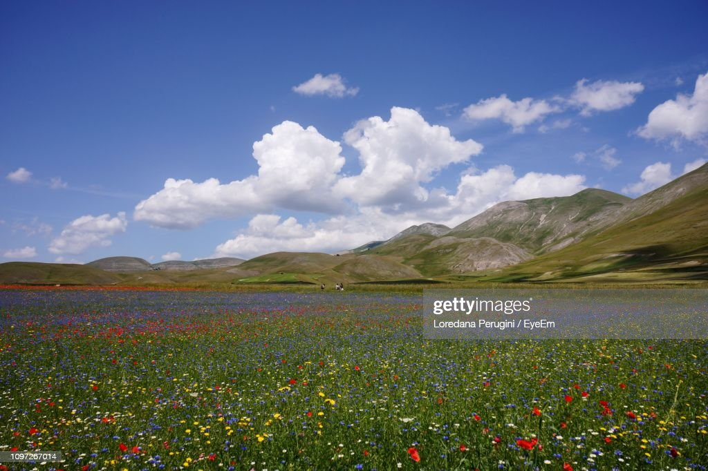 Scenic View Of Grassy Field Against Cloudy Sky : Foto stock