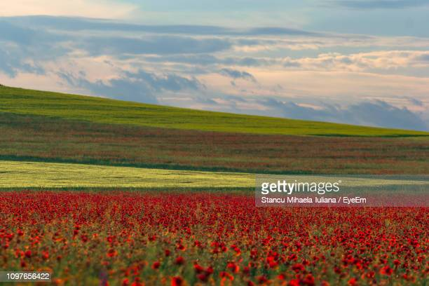 scenic view of grassy field against cloudy sky - moldova stock pictures, royalty-free photos & images