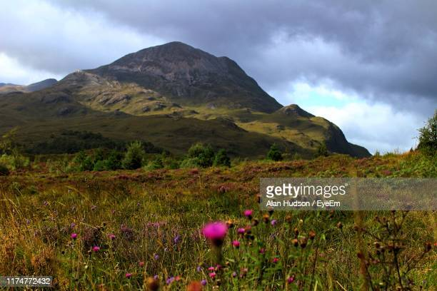 scenic view of grassy field against cloudy sky - wester ross stock pictures, royalty-free photos & images