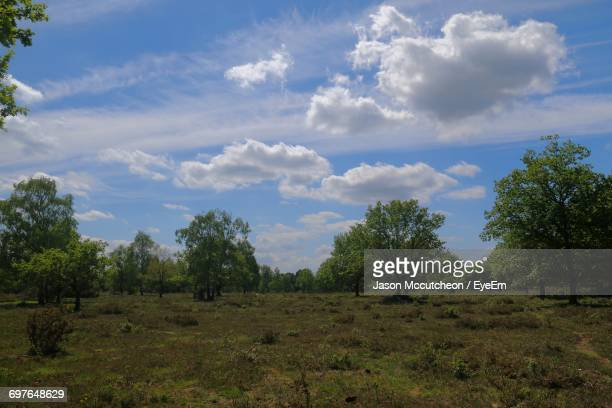 scenic view of grassy field against cloudy sky - ウェスト・バークシャー ストックフォトと画像