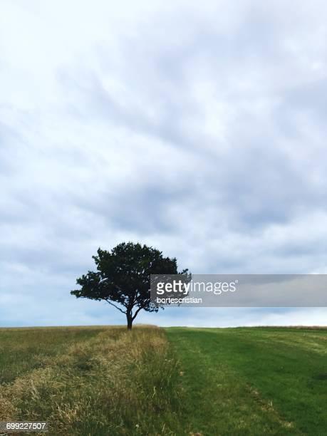 scenic view of grassy field against cloudy sky - bortes stockfoto's en -beelden