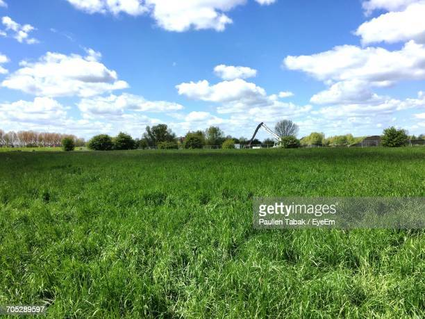 scenic view of grassy field against cloudy sky - paulien tabak stock pictures, royalty-free photos & images