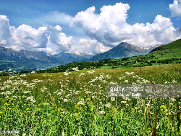 scenic view of grassy field against cloudy sky - embrun stock pictures, royalty-free photos & images