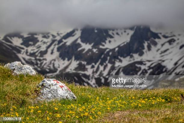 scenic view of grassy field against mountain - michael jaeger stock pictures, royalty-free photos & images
