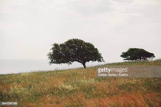 scenic view of grassy field against sky - bortes cristian stock photos and pictures