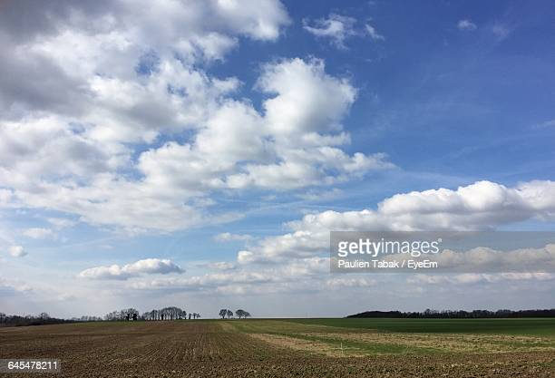 scenic view of grassy field against sky - paulien tabak stock pictures, royalty-free photos & images