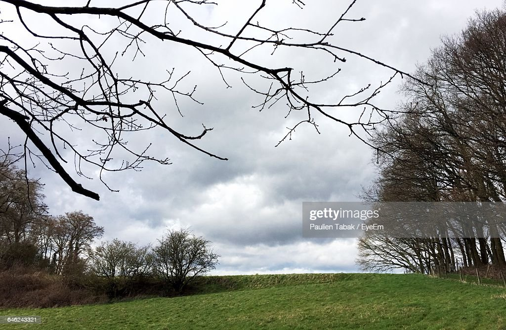 Scenic View Of Grassy Field Against Sky : Stock Photo