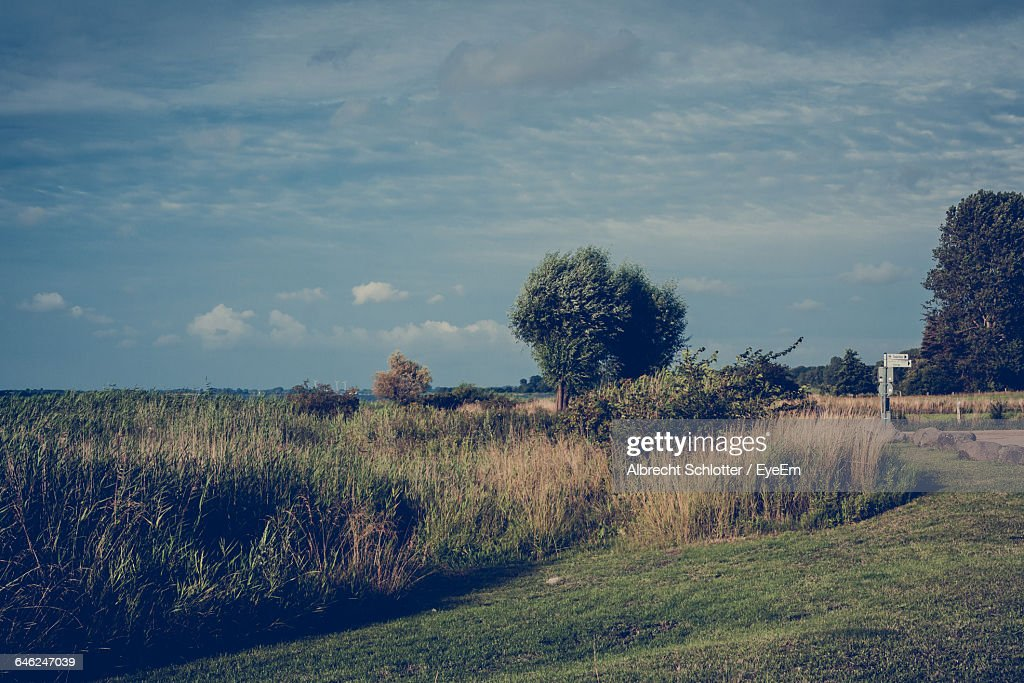 Scenic View Of Grassy Field Against Sky : Stock-Foto