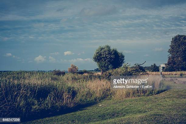scenic view of grassy field against sky - albrecht schlotter stock photos and pictures