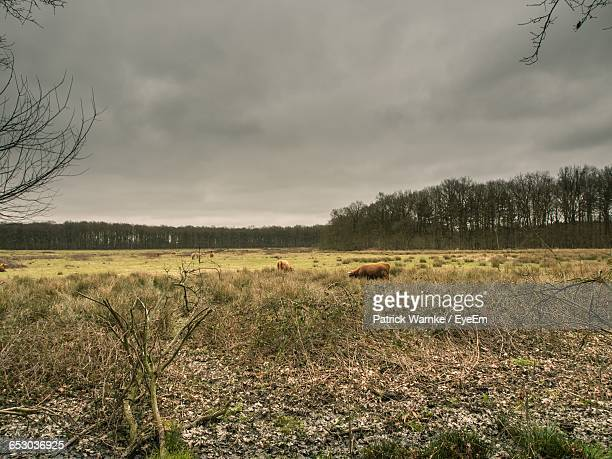 scenic view of grassy field against sky - sumpmark bildbanksfoton och bilder