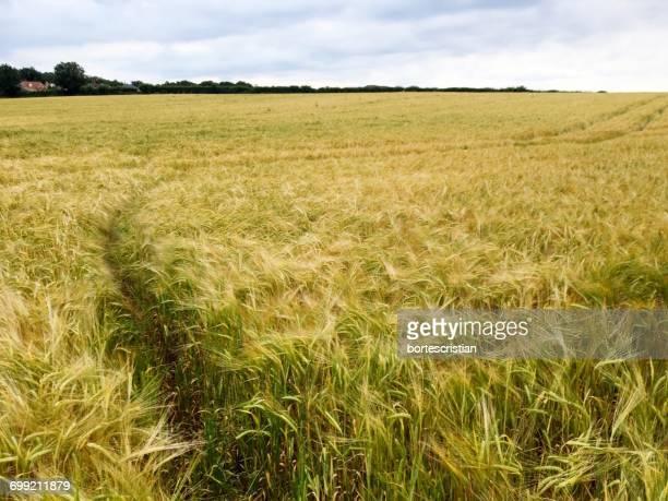 scenic view of grassy field against sky - bortes stockfoto's en -beelden