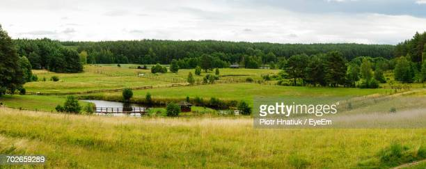scenic view of grassy field against sky - piotr hnatiuk foto e immagini stock