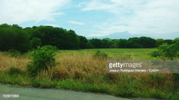 scenic view of grassy field against sky - nuevo leon state stock pictures, royalty-free photos & images