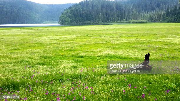 Scenic View Of Grassy Field Against Trees In Forest