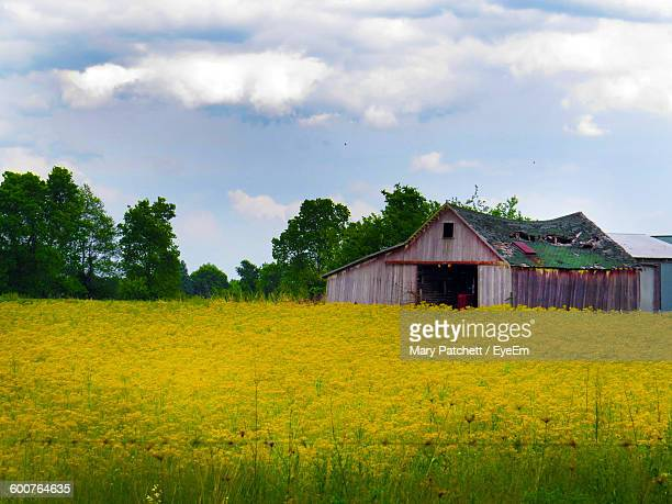 Scenic View Of Grassy Field By House Against Sky