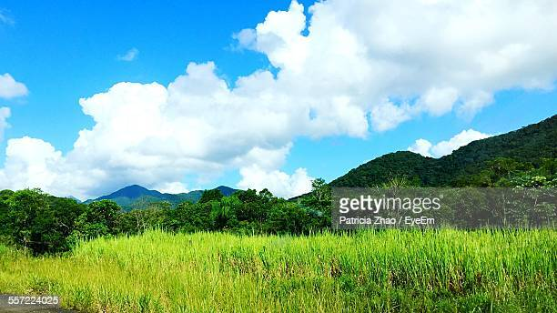 Scenic View Of Grassy Field By Tree Mountains Against Sky