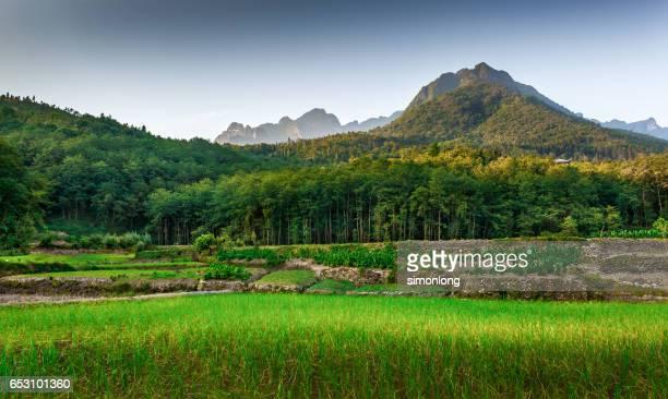 scenic view of grassy field in yunnan,china - provinz yunnan stock-fotos und bilder