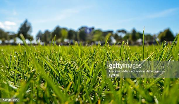 Scenic View Of Grassy Field