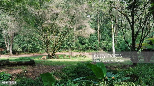 scenic view of grassy field - bogor stock pictures, royalty-free photos & images