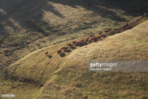 scenic view of grassy field - correze stock pictures, royalty-free photos & images