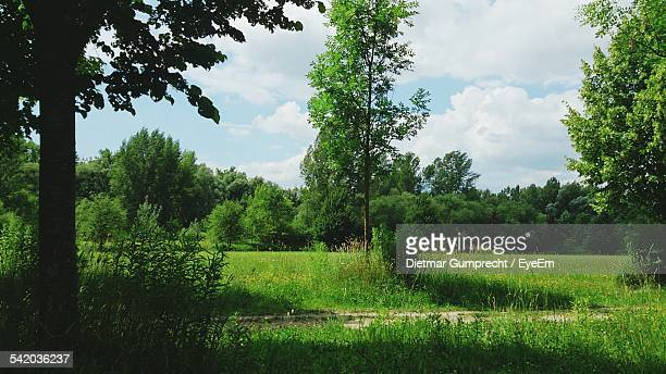 Scenic View Of Grassy Field With Trees Against Sky