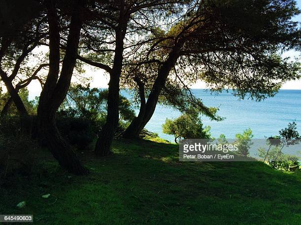 scenic view of grassy landscape against blue sky - boban stock pictures, royalty-free photos & images