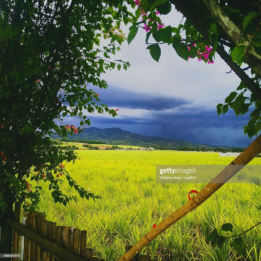 Scenic View Of Grassy Landscape Against Cloudy Sky : Stock Photo