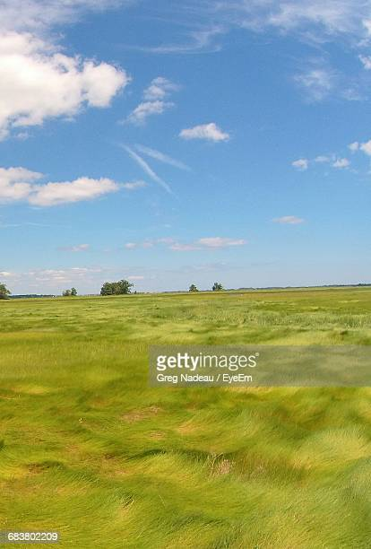 Scenic View Of Grassy Landscape Against Sky