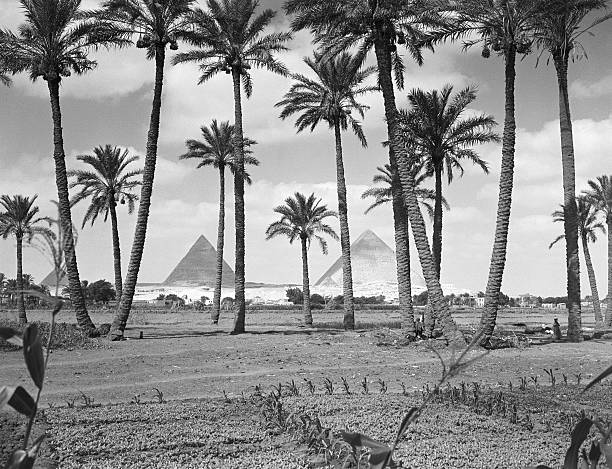 Scenic view of Great Pyramids at Giza seen from farming...