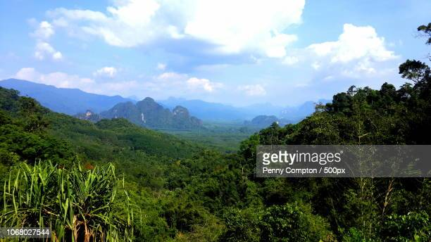 scenic view of green rainforest - forrest compton stock pictures, royalty-free photos & images