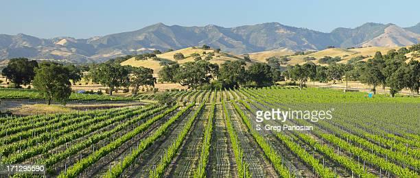Scenic view of green Santa Barbara Vineyard
