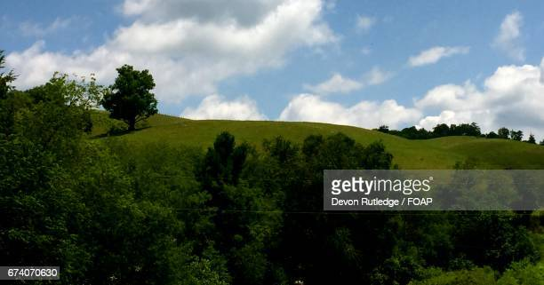 scenic view of hill - coltsfoot stock photos and pictures