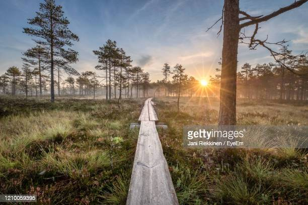 scenic view of idyllic wetland against sky during sunset with wooden path - finland stock pictures, royalty-free photos & images