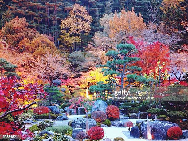 scenic view of japanese garden during autumn - japanese garden stock photos and pictures