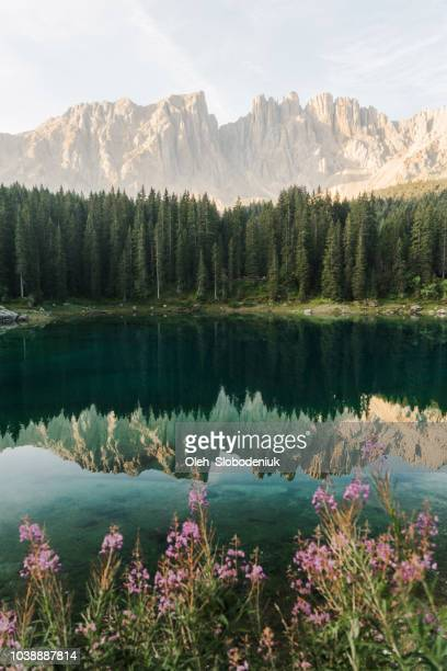 scenic view of lago di carezza in dolomites - vertical stock pictures, royalty-free photos & images