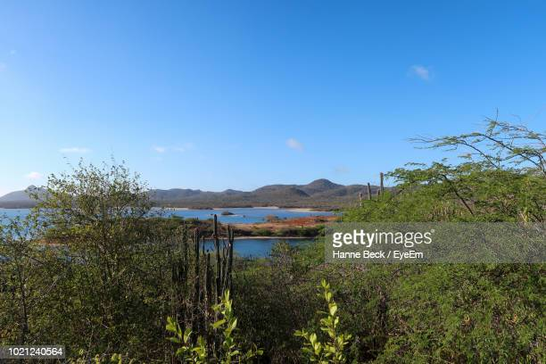 scenic view of lake against blue sky - ボネール島 ストックフォトと画像