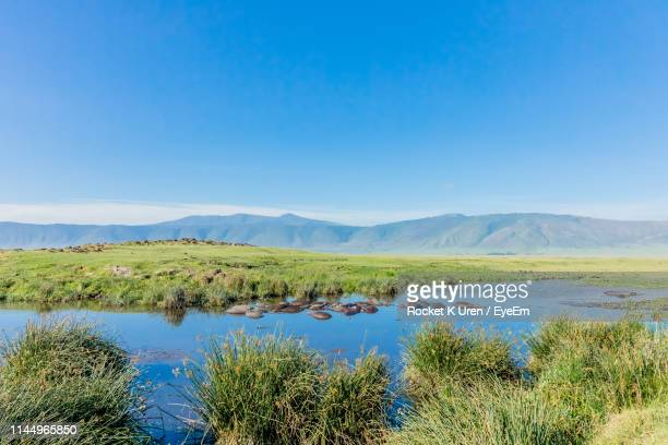 scenic view of lake against blue sky - arusha national park stock photos and pictures