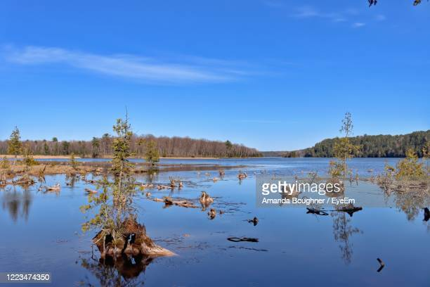 scenic view of lake against blue sky - amanda marsh stock pictures, royalty-free photos & images
